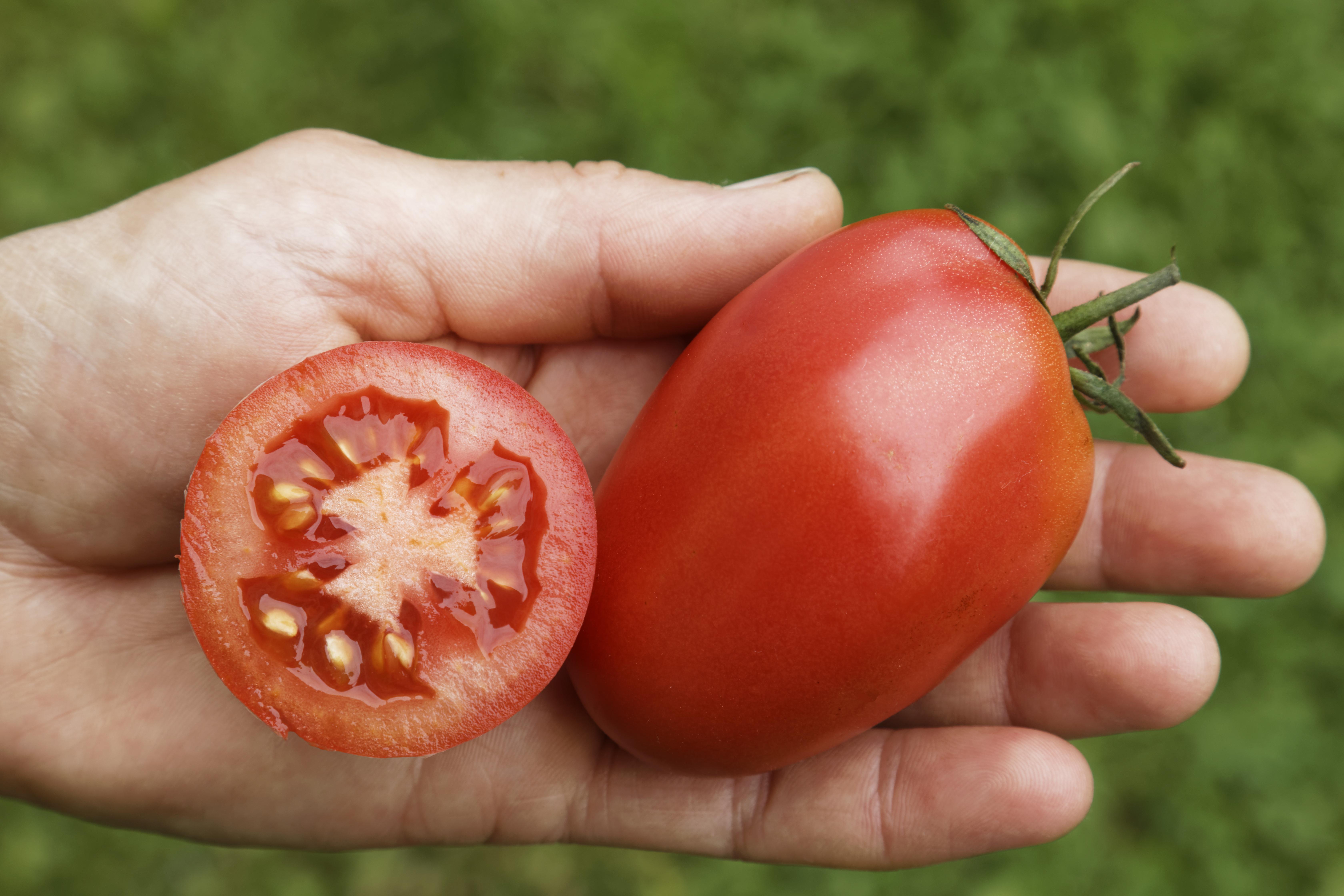 Rote Zora – Culinaris