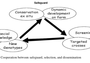 Cooperation between safeguard selection
