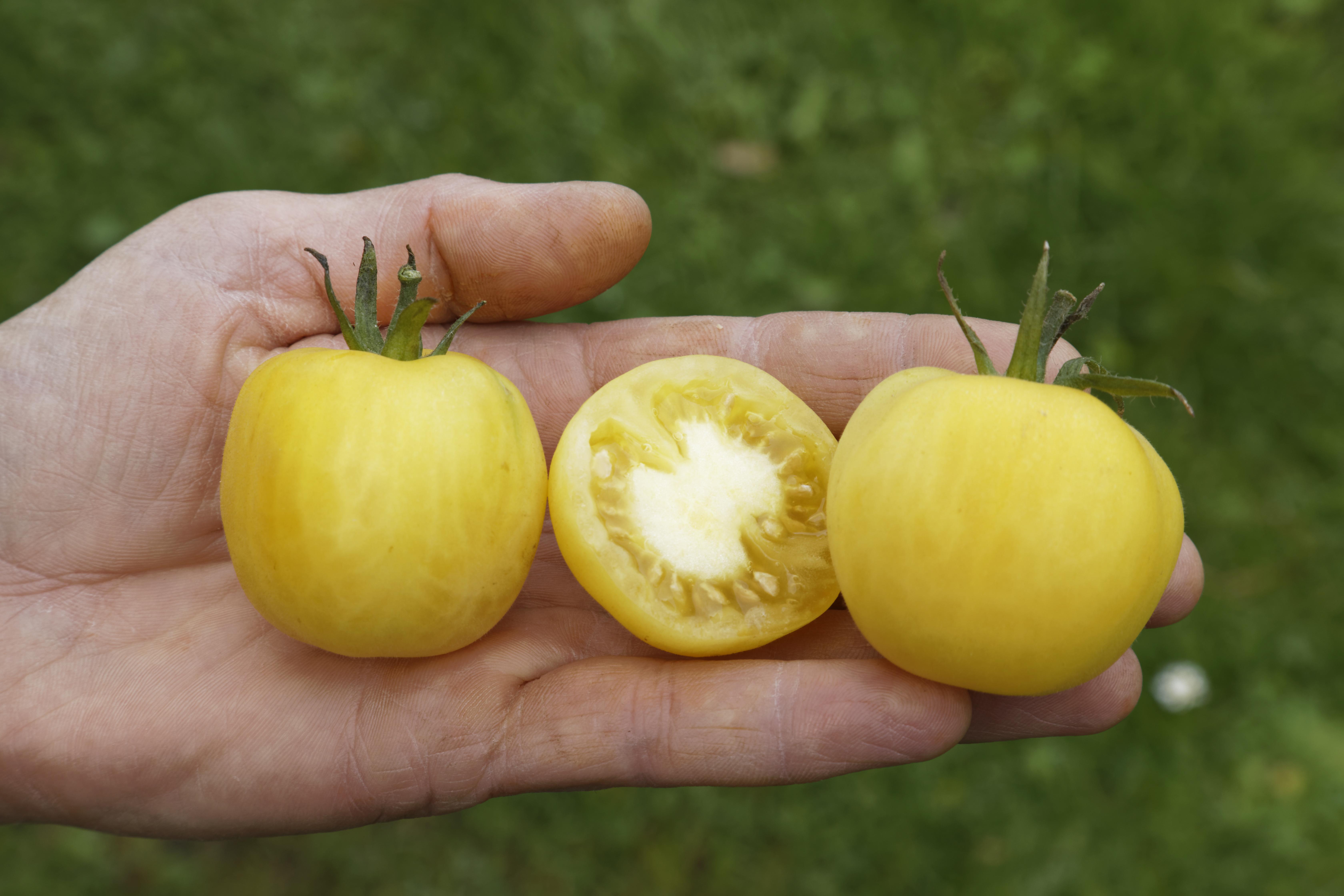Weißer Pfirsich – Culinaris